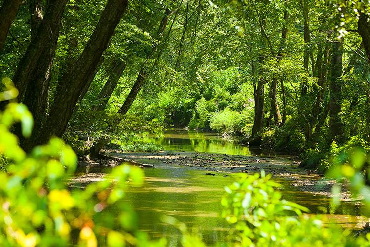 A stream flows through Robinson Forest on a summer's day.