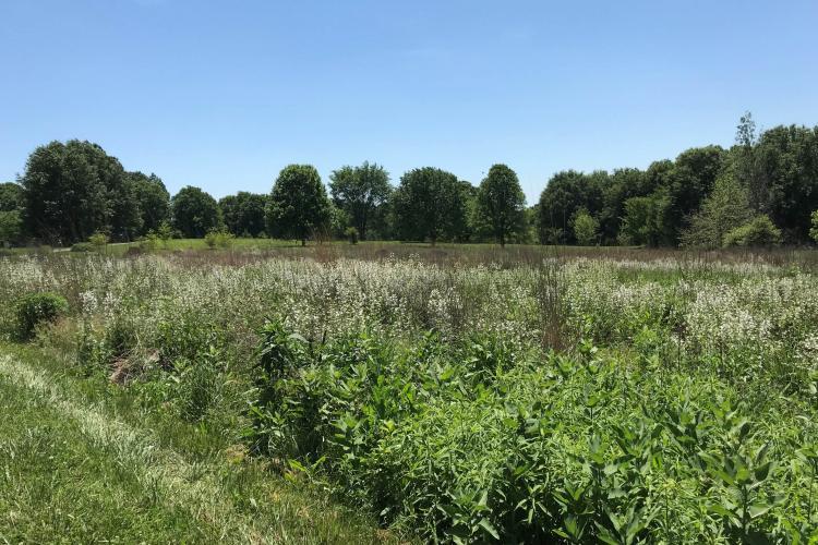 Wildflower meadow at The Arboretum