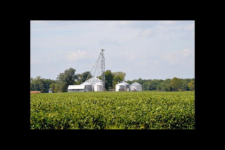 Soybeans and silos