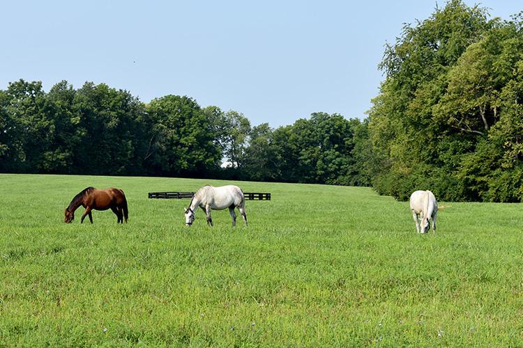 Horses graze at Spendthrift Farm. Photo by Katie Pratt, UK agricultural communications.