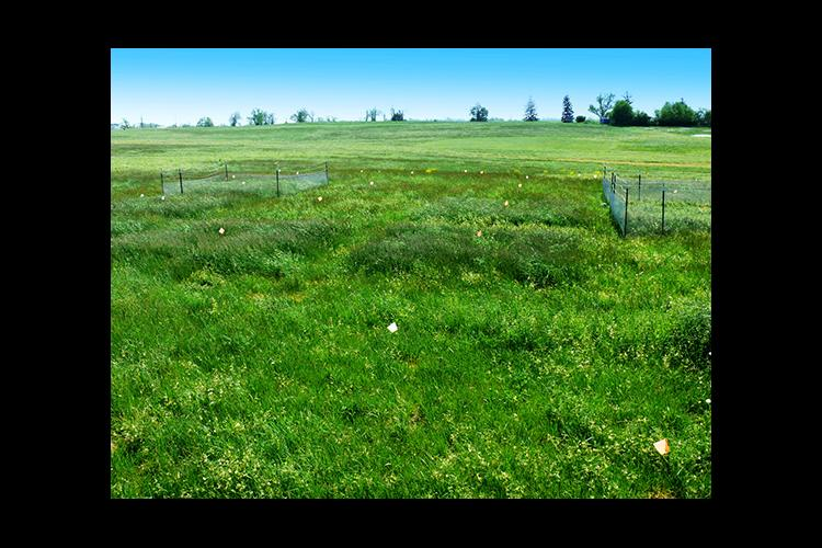 This site at UK's Spindletop Research Farm in Lexington was a part of the international study.
