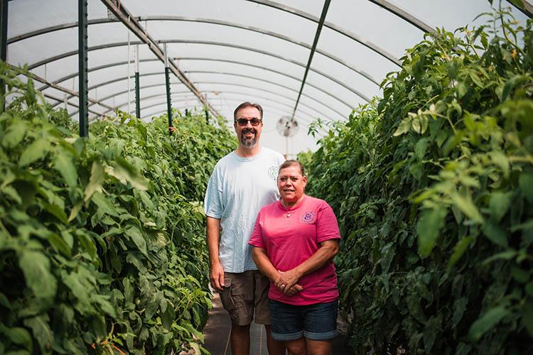 Mark and Velvet Henkle in a high tunnel with tomato plants