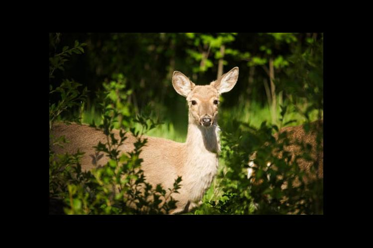 Ohio River Valley Woodlands and Wildlife Workshop offers sessions on wildlife management.