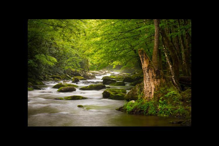 An Appalachian stream through the forest