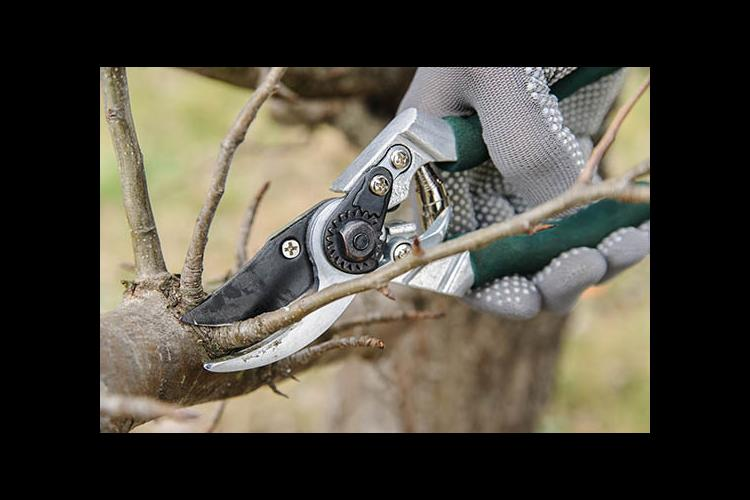 Pruning is good for a tree's health.