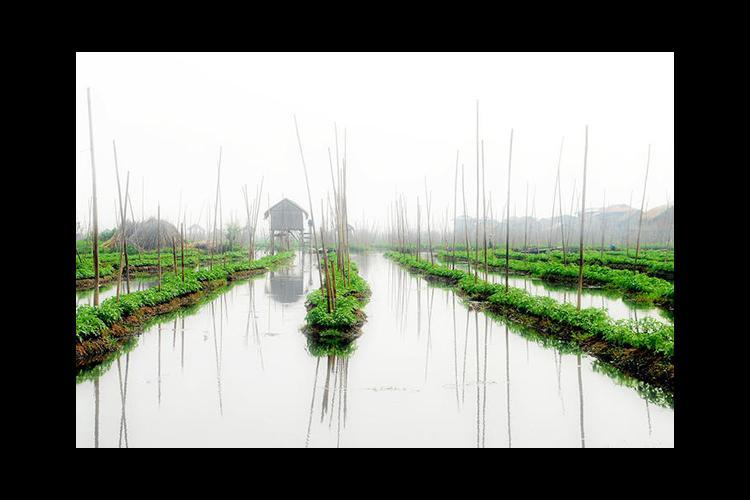 Floating tomato farm in Myanmar