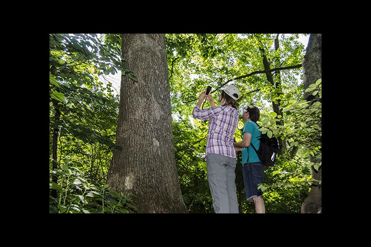 Ellen Crocker and Bradford Condon collect data from a tree using the TreeSnap app.