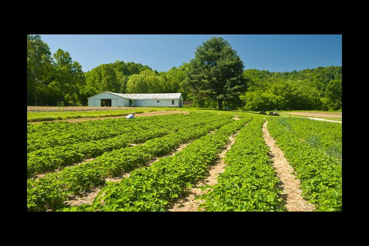Vegetable field