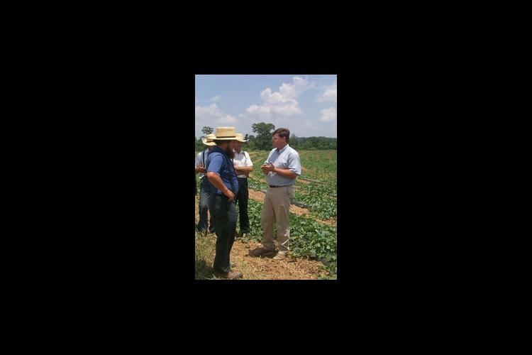 University of Kentucky Extension Entomologist Ric Bessin told produce growers that cucumber beetles were the No. 1 pest affecting melons in Kentucky.