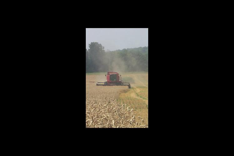 This year's wheat harvest is nearly complete with reports of good yields and quality grain.