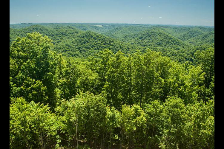 Woodlands in Breathitt County.