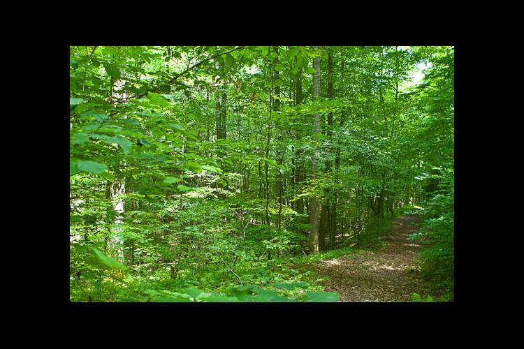 Ohio River Valley Woodland and Wildlife Workshop on March 23