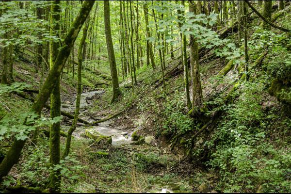 A woodland ravine in summer