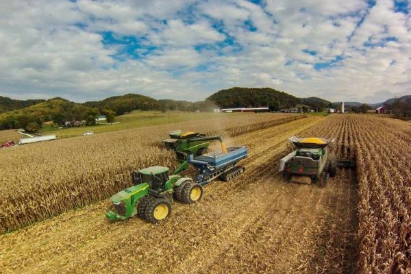 Corn harvest. Photo by Matt Barton,  UK agricultural communications.
