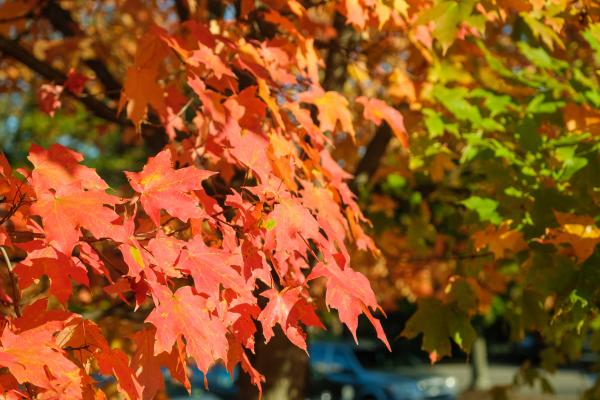 Leaves showing fall colors.