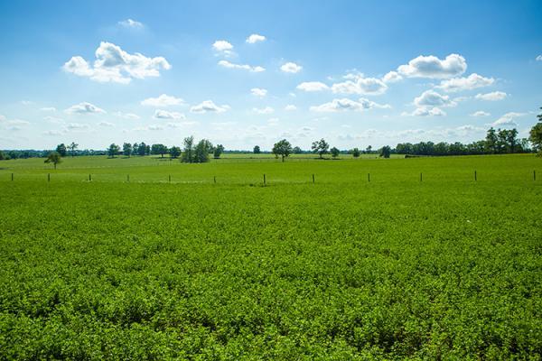 Field of alfalfa in Scott County. Photo by Matt Barton, UK agricultural communications.