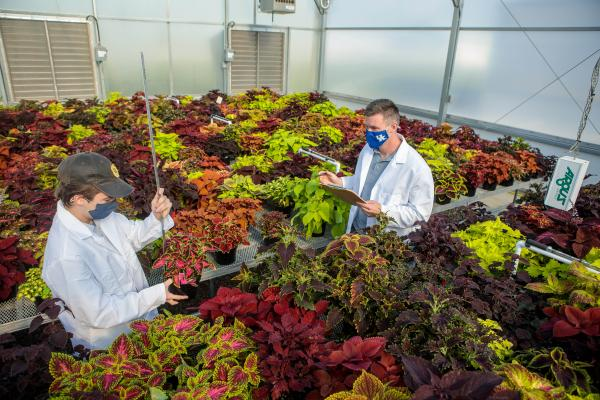 Ty Rich (left) and Paul Cockson record data in a variety trial for coleus.