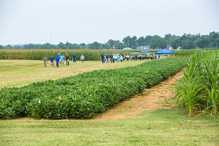 Participants walk between stations during a past Corn, Soybean and Tobacco Field Day. Photo by Matt Barton, UK agricultural communications.