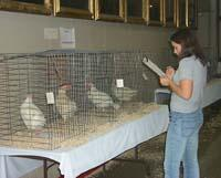 A 4-Her evaluates poultry at the 2003 Kentucky State Fair.