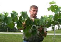 Kim Strohmeier looks at grape research.
