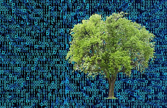 tree with digitized background
