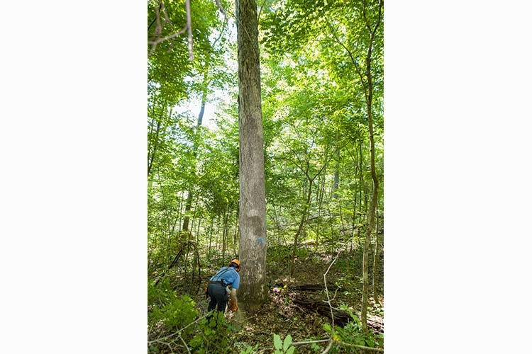 Logging in a well-managed forest
